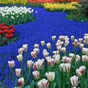 Keukenhof garden is a festival of colours for photographers