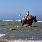 Oostduinkerke Festival: Photographing Shrimp Fishing on Horseback